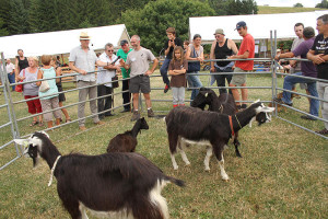 prix chèvres - Saint front 2015