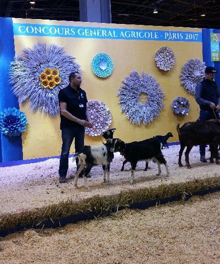 La chèvre M-C au SIA 2107 – épisode 2